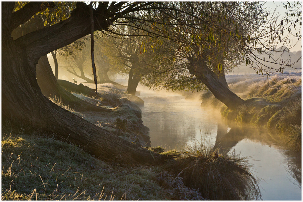 Photograph Frosty Moming Mist by Lynda Morris LRPS on 500px