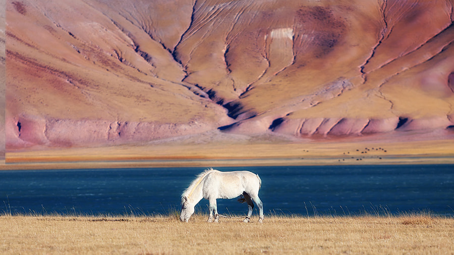 A horse by the lake by Chenwah Lee 李進華 on 500px.com