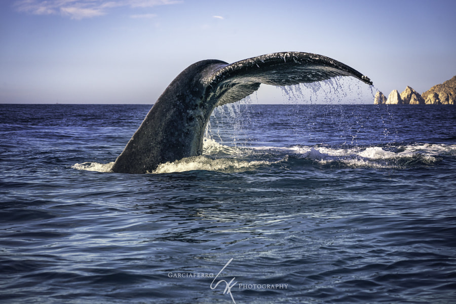 Whale tail  by Cristobal Garciaferro on 500px.com