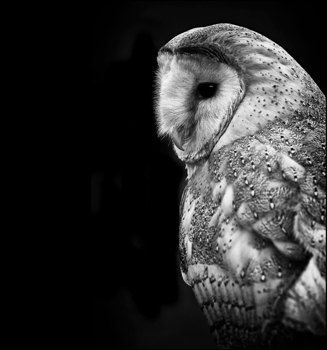 Photograph Tyto Kevin 1 by Mat Whittington on 500px