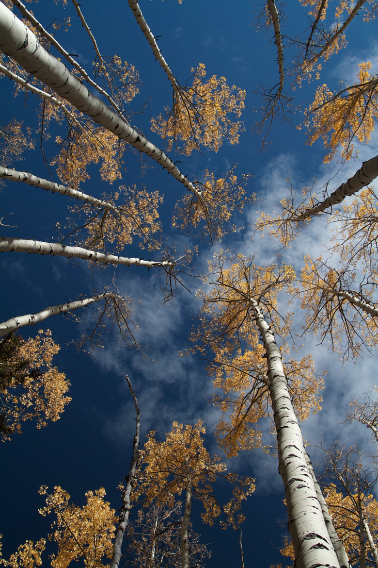 Photograph Aspens Turning by Michael Galassi on 500px