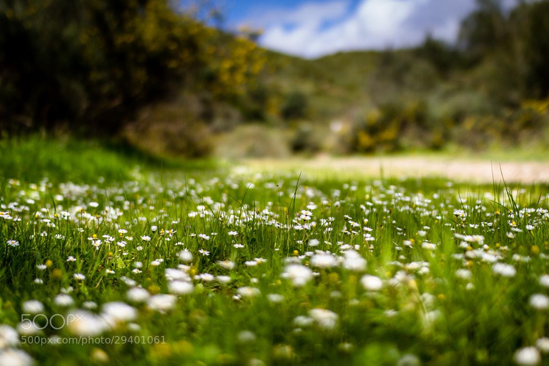 Photograph Primavera by Daniel Villalobos on 500px