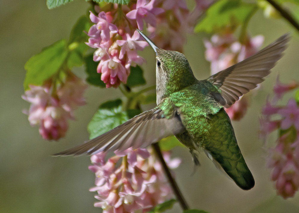 Photograph Flying Into The Currant by Chris Picard on 500px