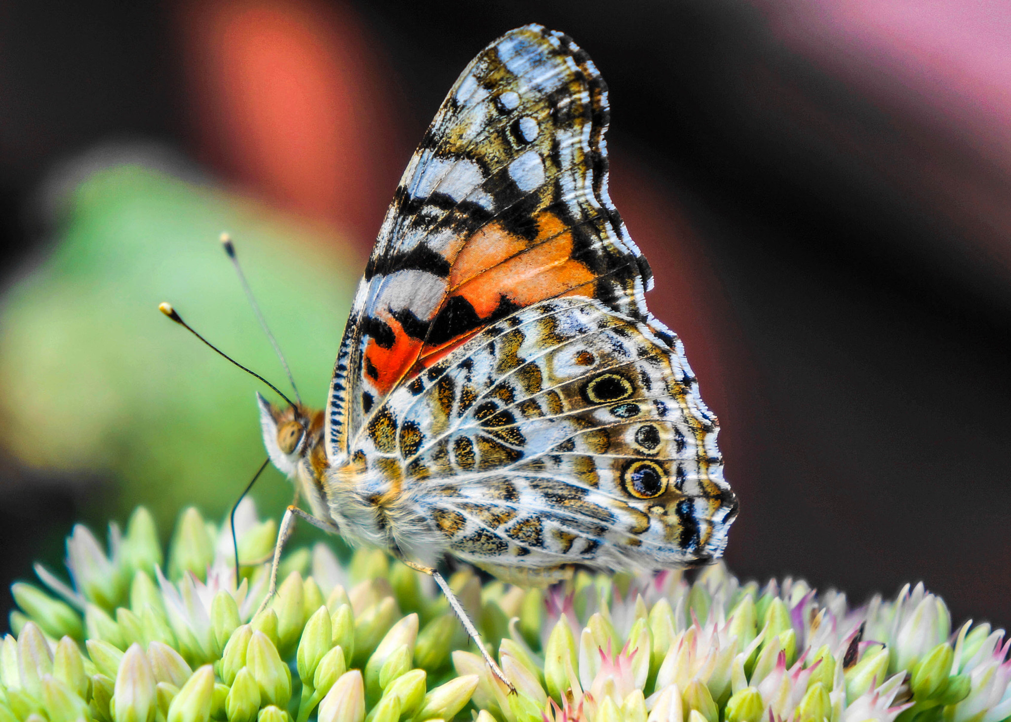 Photograph Painted Wings by Alyssa Paraggio on 500px