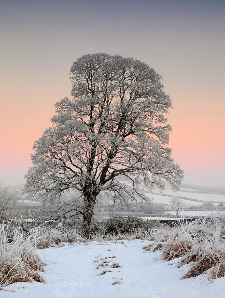 Photograph Winter Eve by James  Coard on 500px