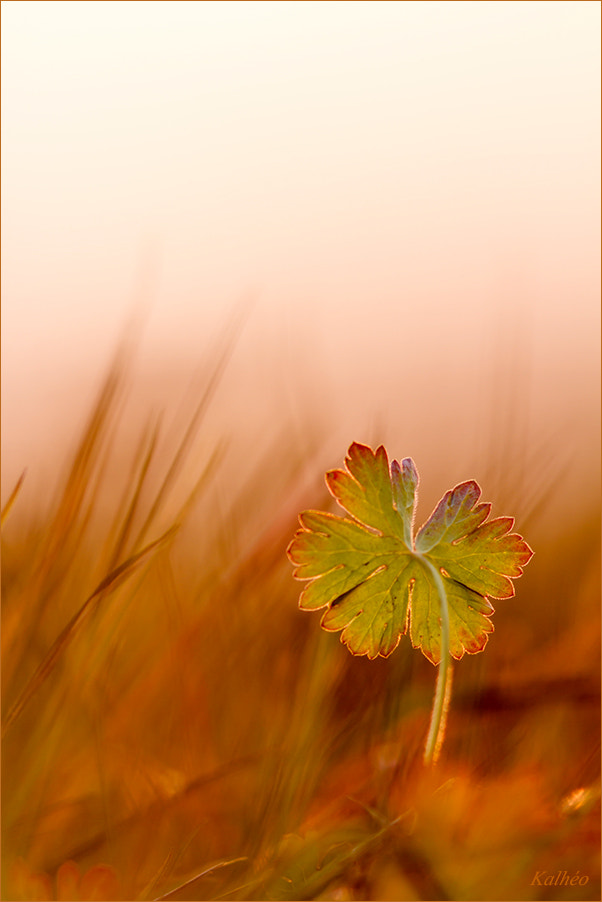 Photograph 5feuilles... by florence Kalheo on 500px