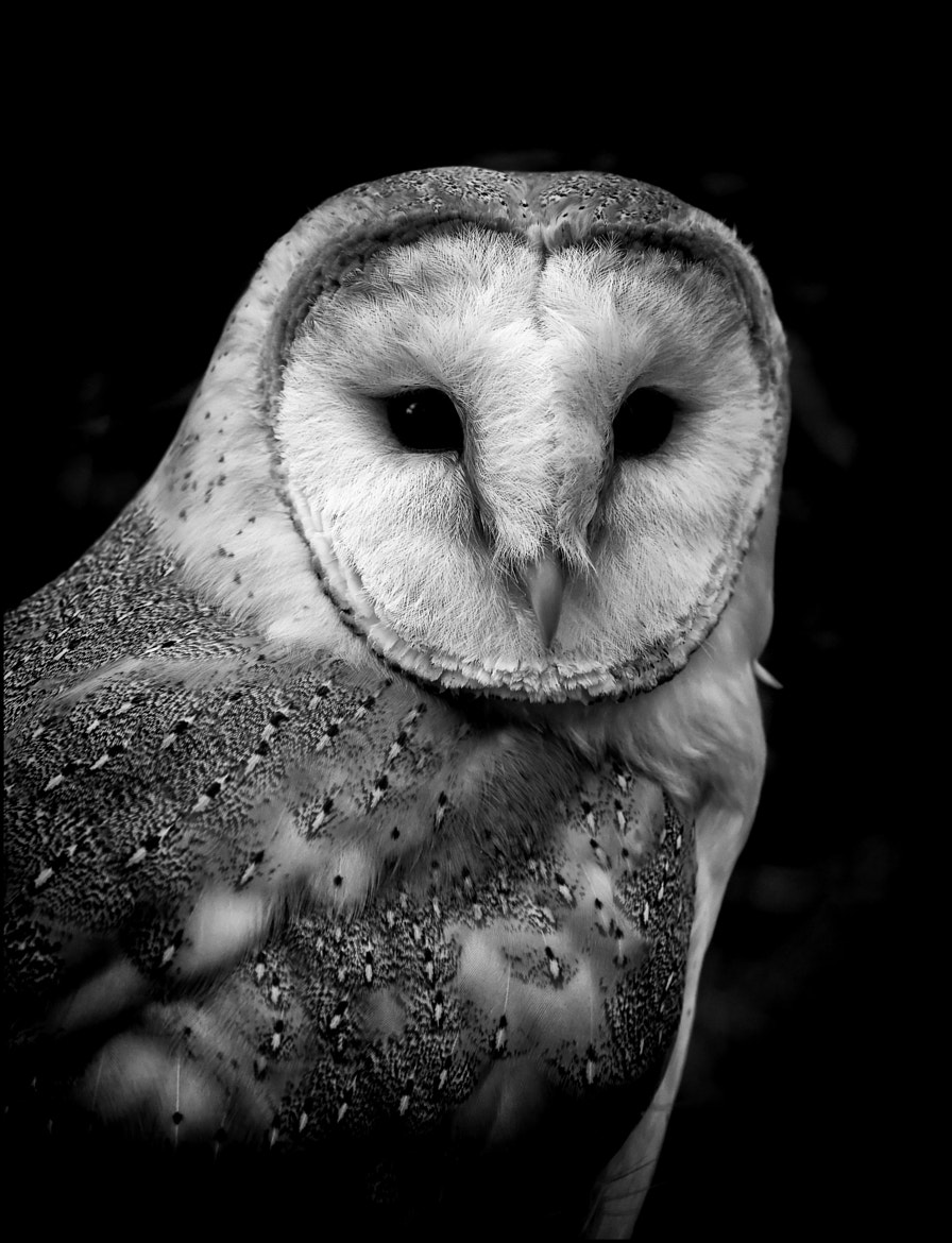 Photograph Tyto Kevin 3 by Mat Whittington on 500px