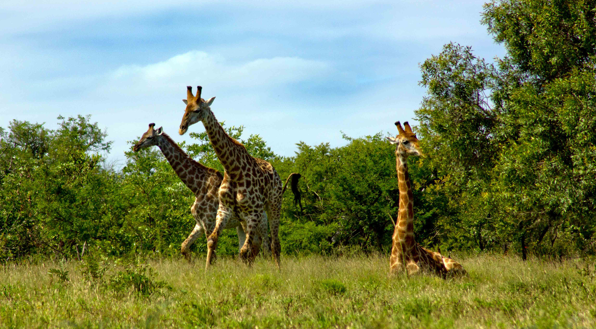 Photograph Giraffe by Nelis Nienaber on 500px