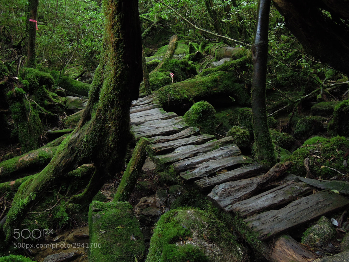 Photograph A bridge in moss by Hidetoshi Matsuo on 500px
