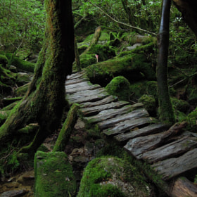 A bridge in moss