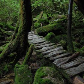 A bridge in moss