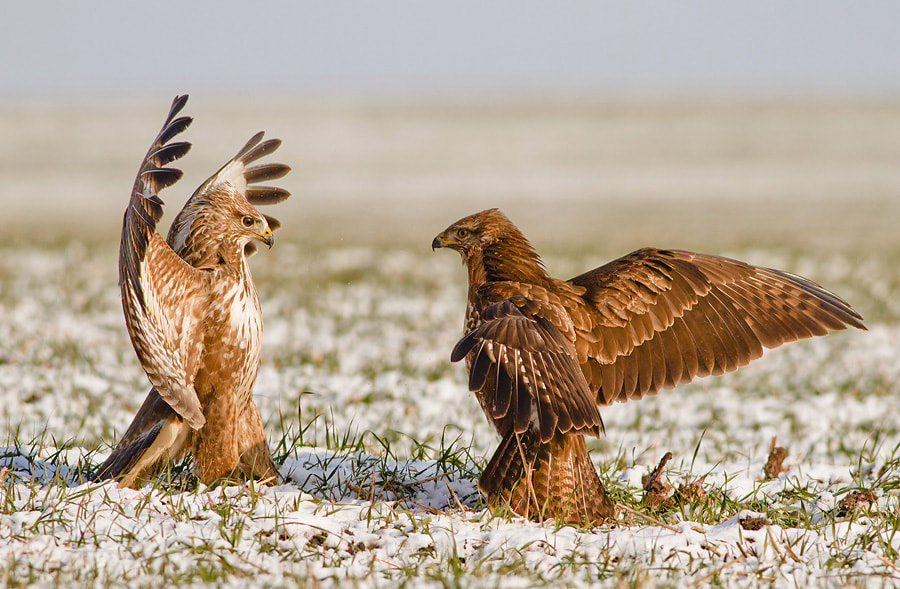 Photograph Round one Fight by Veselin Gramatikov on 500px