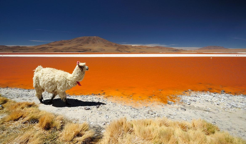 Photograph Laguna Colorada, Bolivia by Nicolas Cornet on 500px