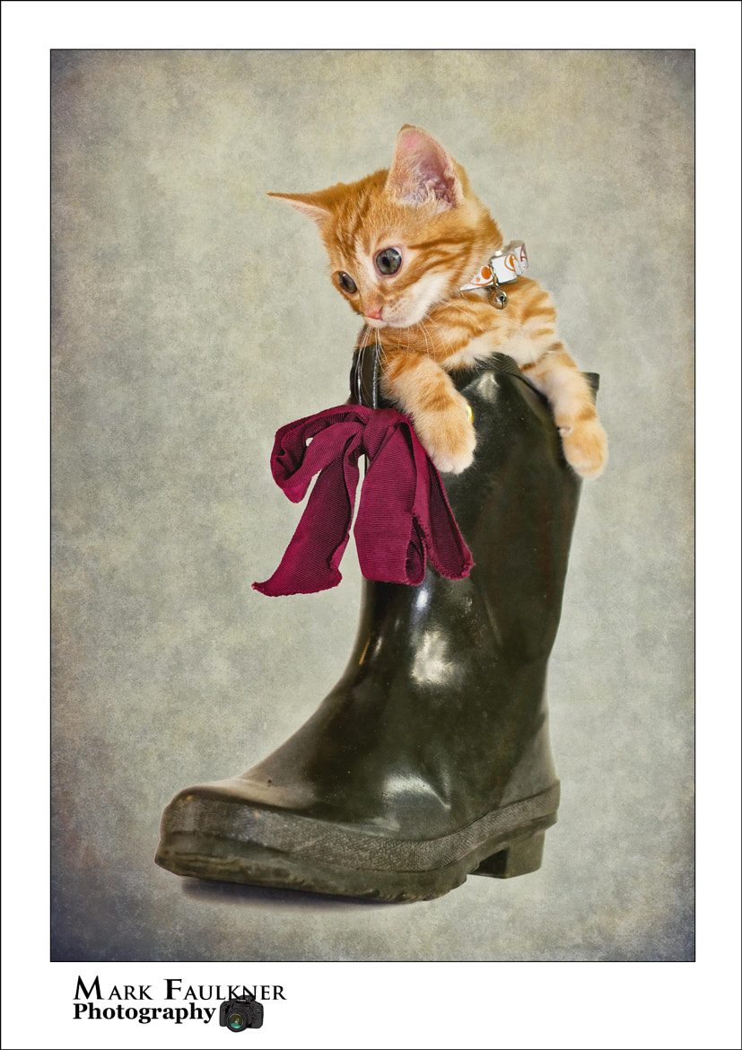 Photograph Puss in boot by Mark Faulkner on 500px