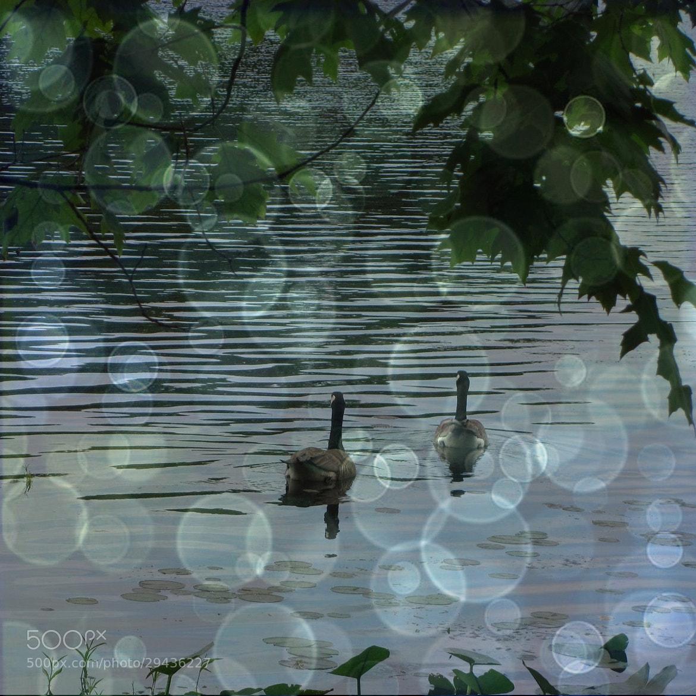 Photograph Untitled by Bonnie McLaren on 500px