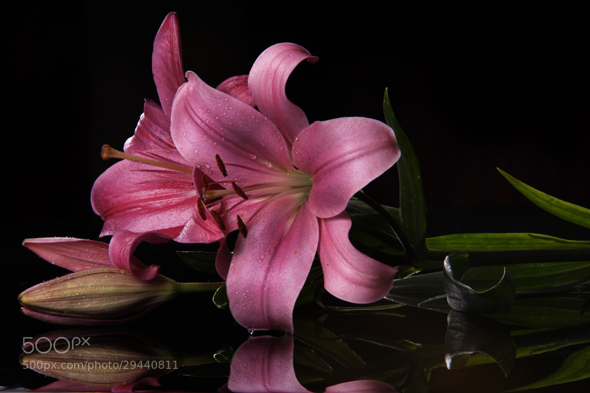 Photograph Lillies and reflections by Cristobal Garciaferro Rubio on 500px