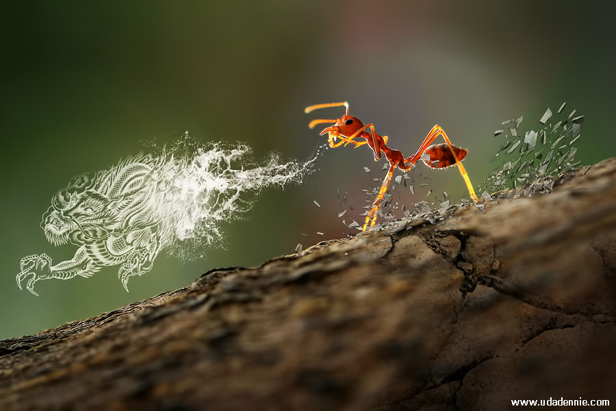Photograph Tai Chi Ant by Uda Dennie on 500px