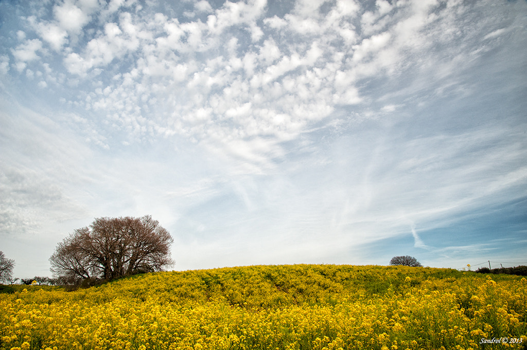 Photograph In yellow by Sandro L. on 500px