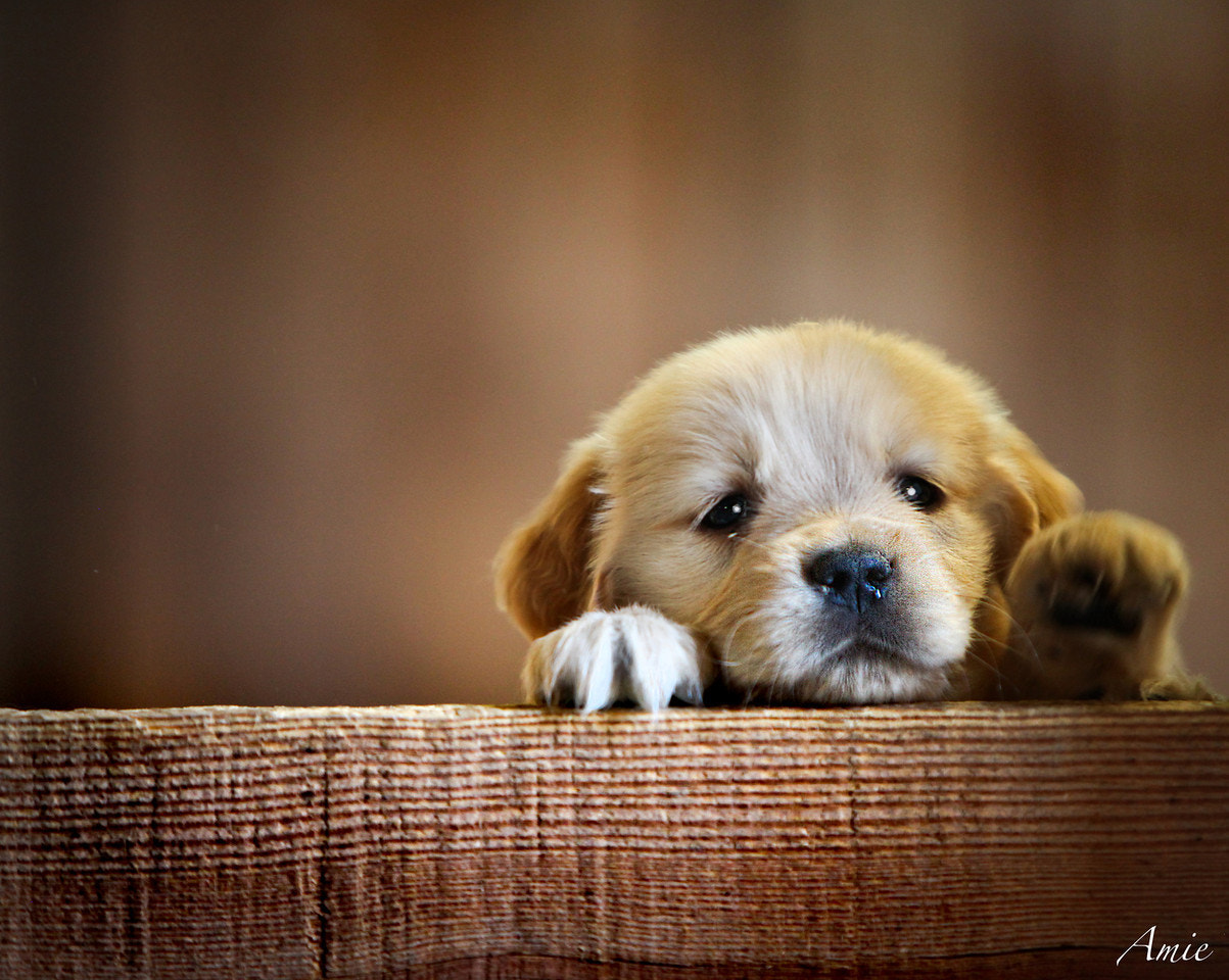 Photograph I want a puppy! by Amie Anderson on 500px
