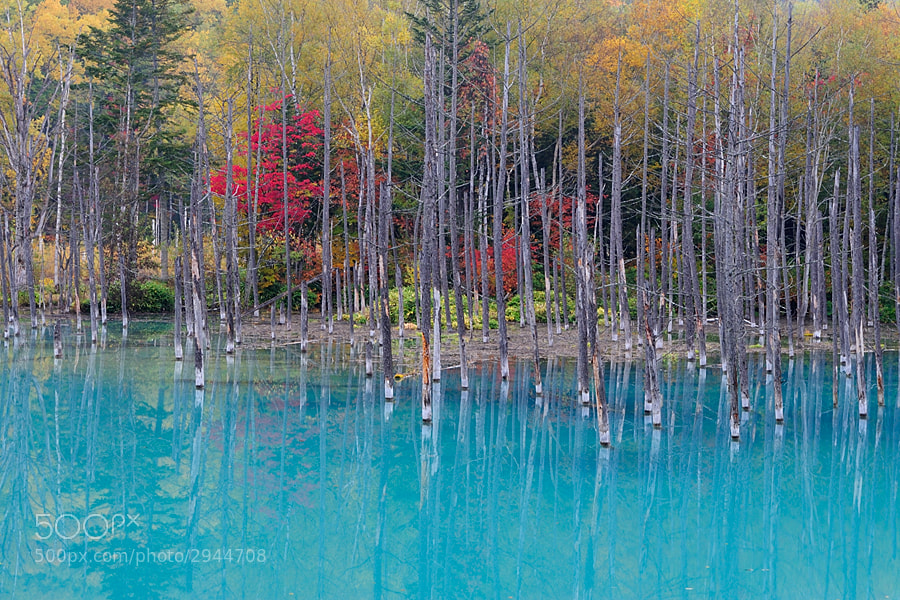 Photograph Blue Pond & Autumnal Leaves in October by Kent Shiraishi on 500px