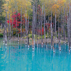 All are nature's tints. 