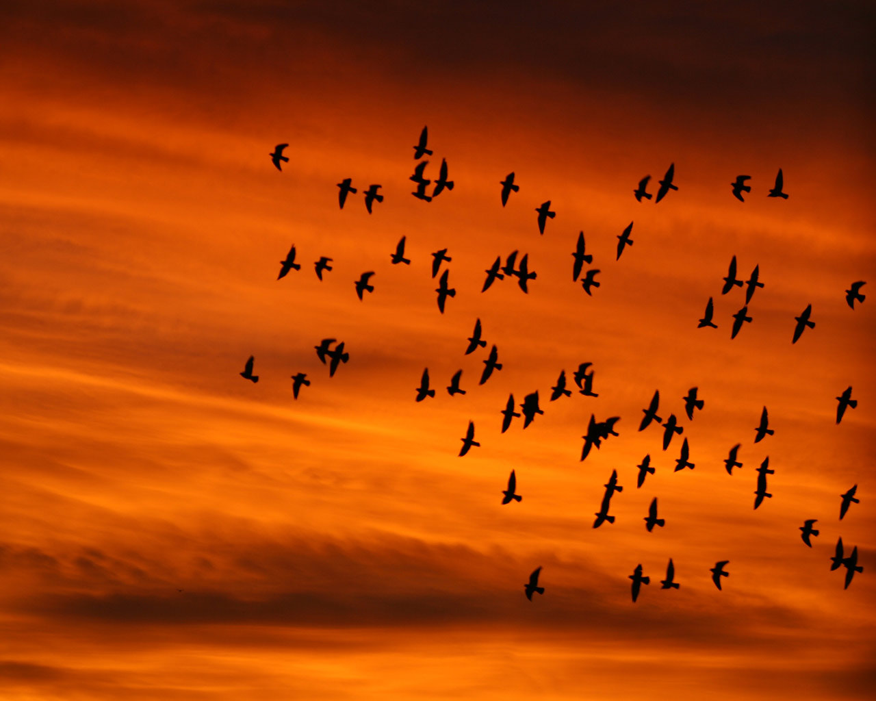 Photograph Birds by Brenda Colossi on 500px
