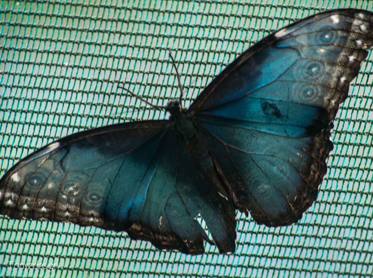 Photograph Butterfly Costa Rica by Anthony Zuñiga on 500px