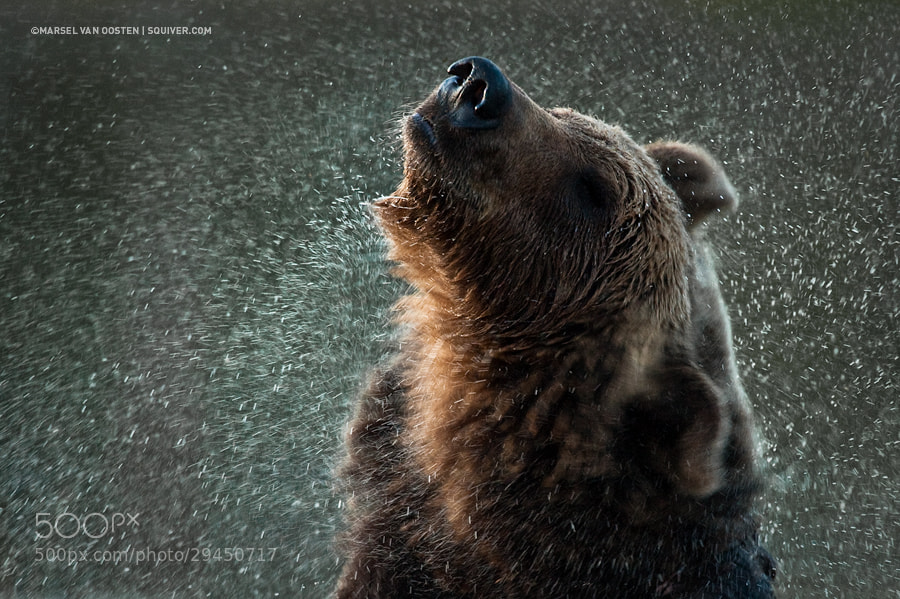 Photograph Midnight Shake by Marsel van Oosten on 500px