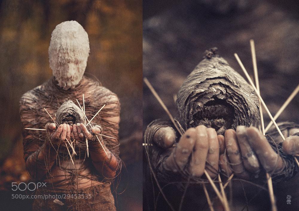 Photograph Amentia by Nikolay Tikhomirov on 500px