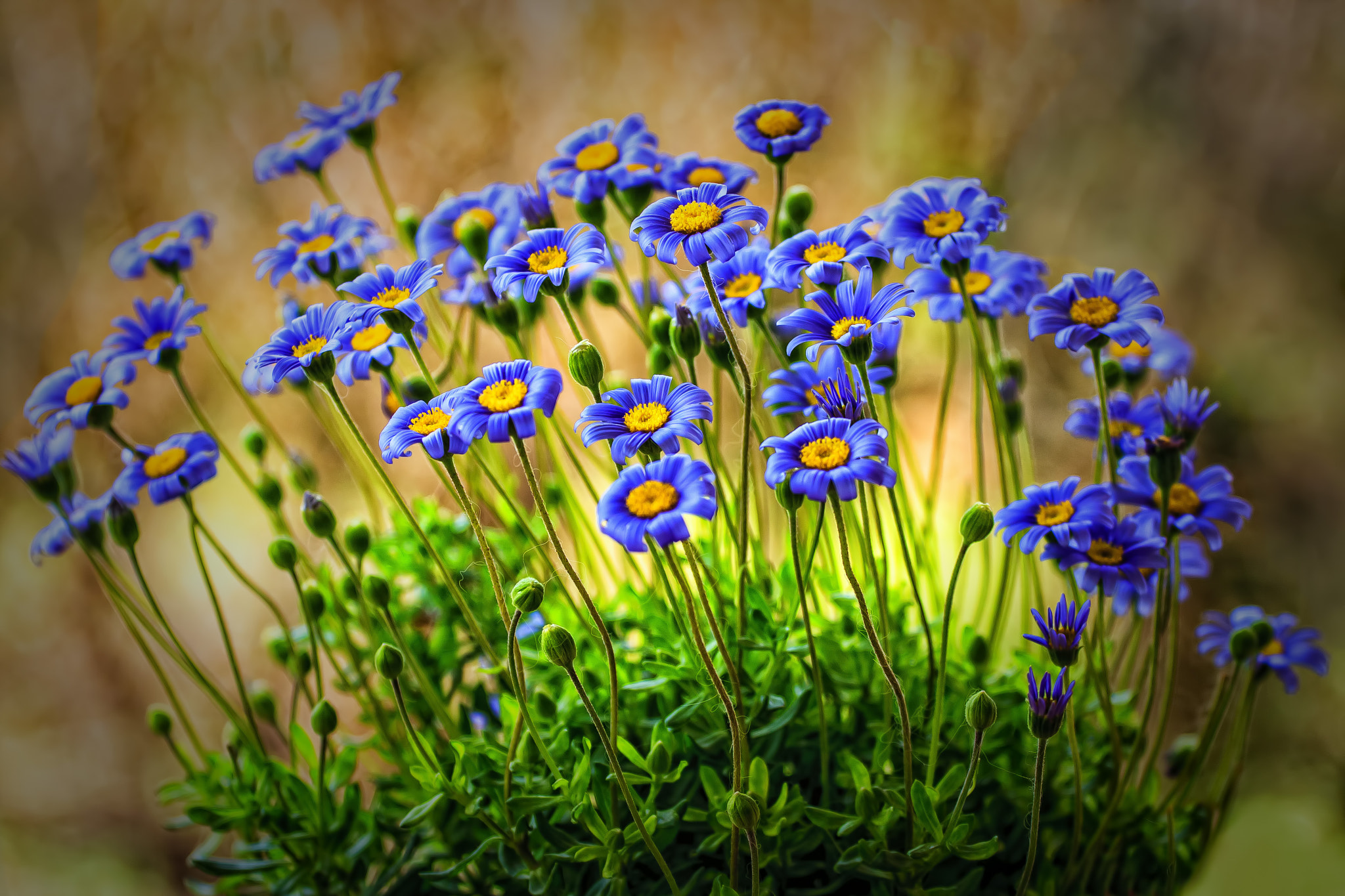 Photograph Blue & Yellow. by Yannis Karantonis on 500px