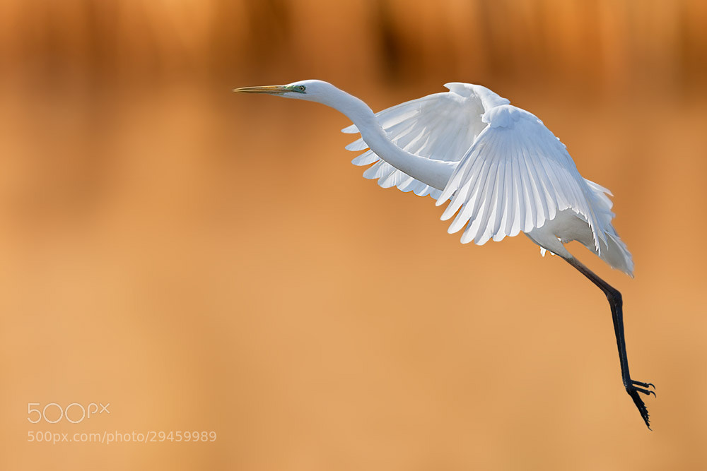 Photograph You can fly with me by Stefano Ronchi on 500px