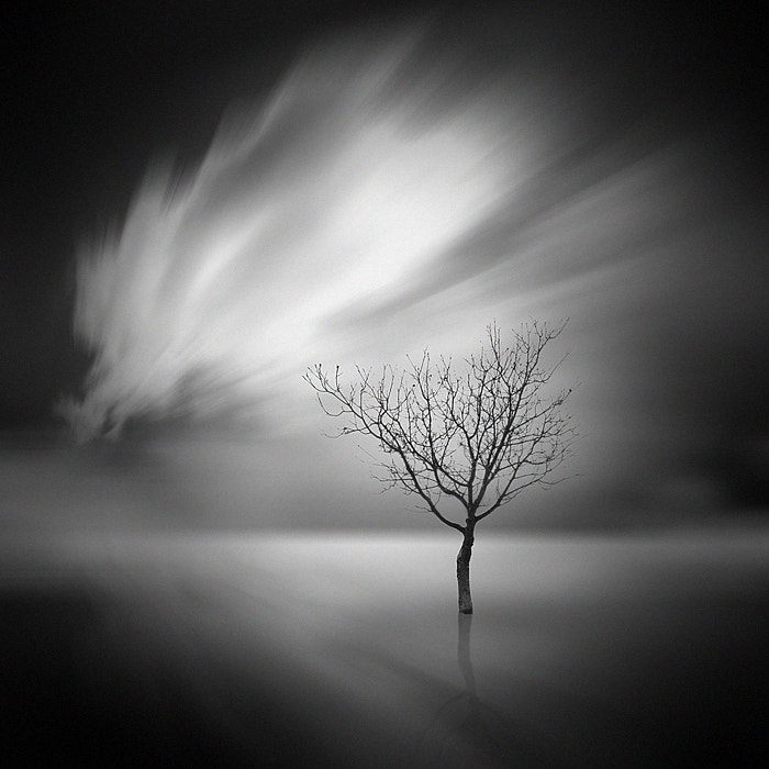 Photograph the lonely tree b&w 02 by Max Ziegler on 500px