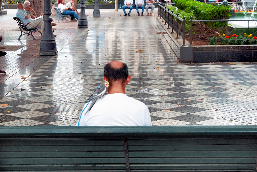 Home Sentado reflexionando cun paxáro by Marco Aº Garcia on 500px.com