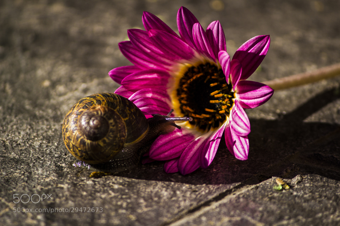 Photograph Snail Trail by Adam Crins on 500px