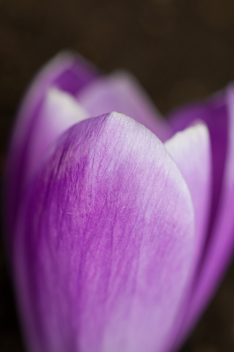 Photograph spring Amethyst by Ralf Kuhn on 500px