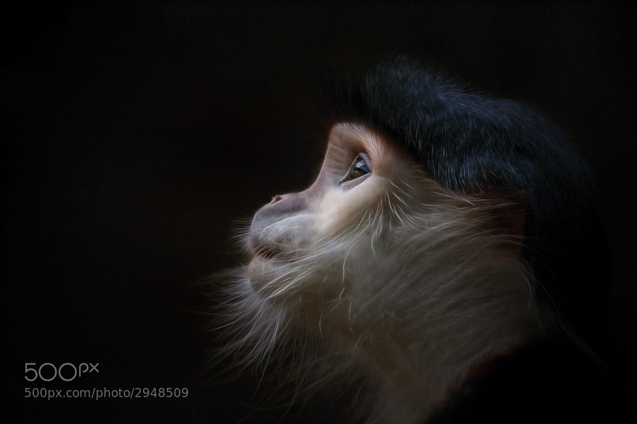 Photograph Vulnerable by Manuela Kulpa on 500px