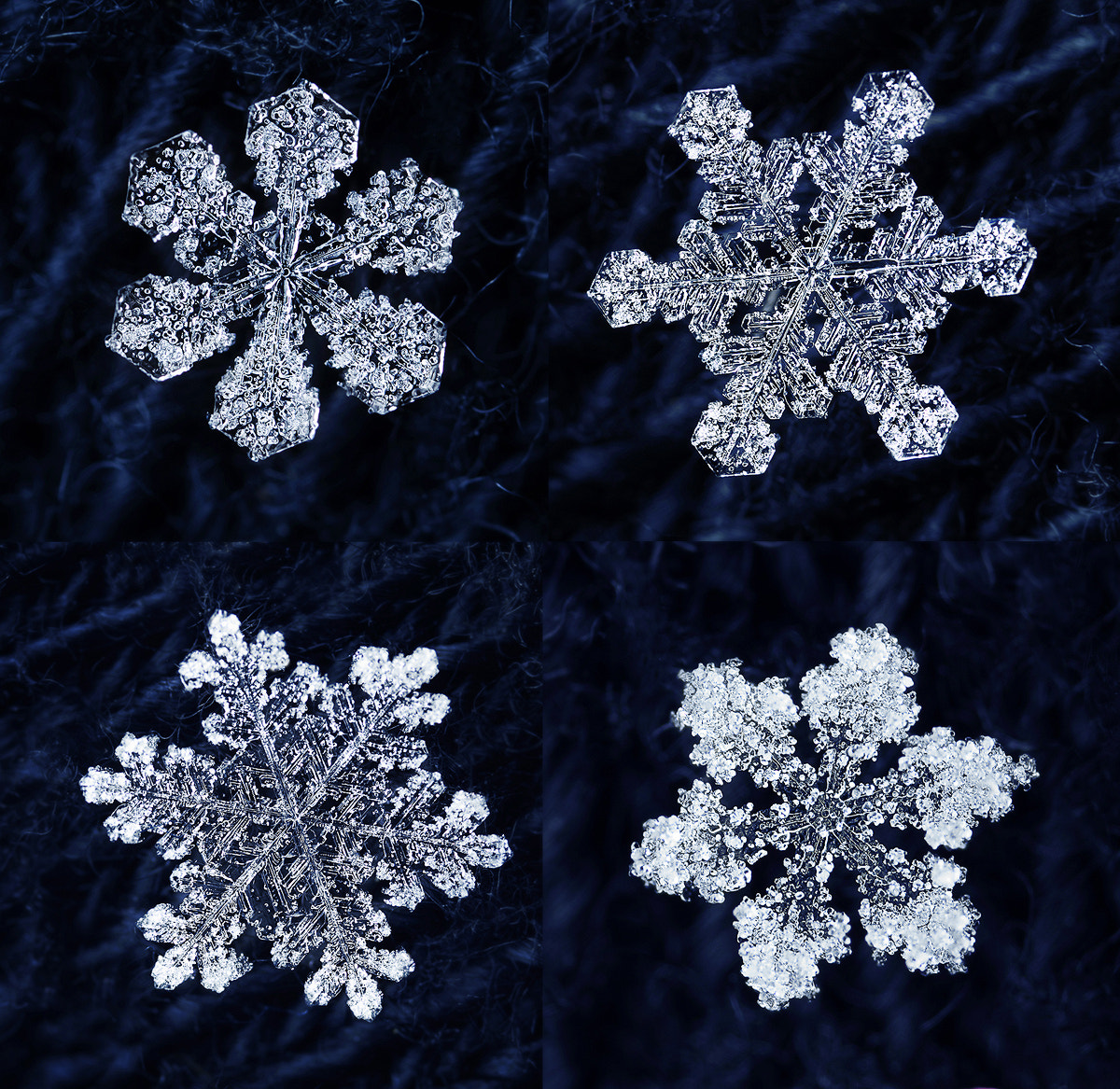 Photograph Snowflakes by Dusan Beno on 500px