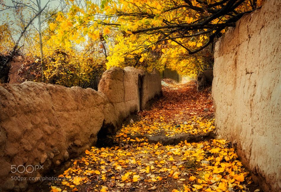 Photograph Untitled by Farshad Davari on 500px