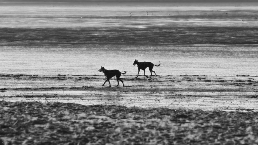 dogs on the beach by Manfred Mauermann on 500px.com