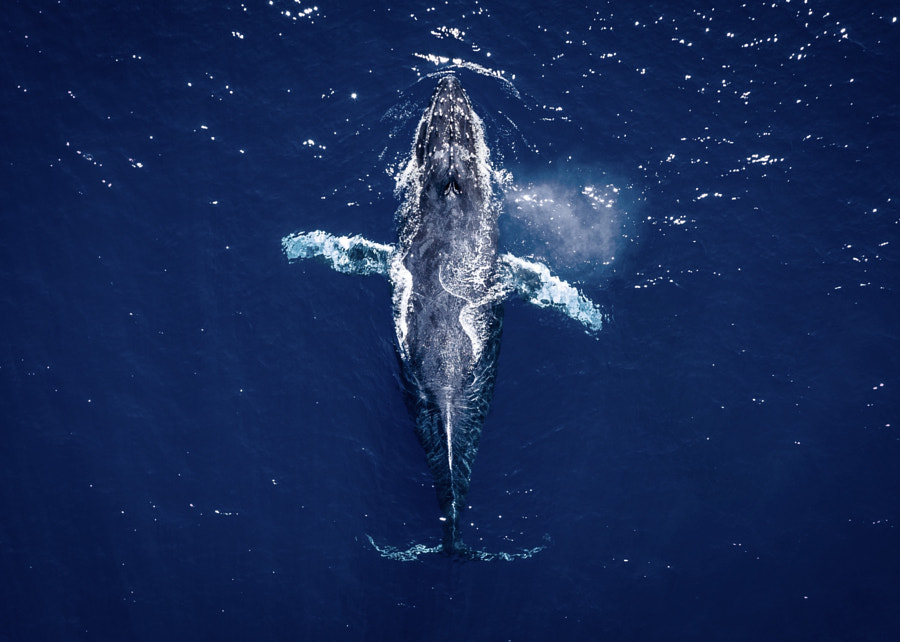 """Happy World Whale Day"" by Chun Chau on 500px.com"