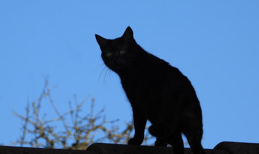 Shadowcat by Fred  Quader on 500px.com