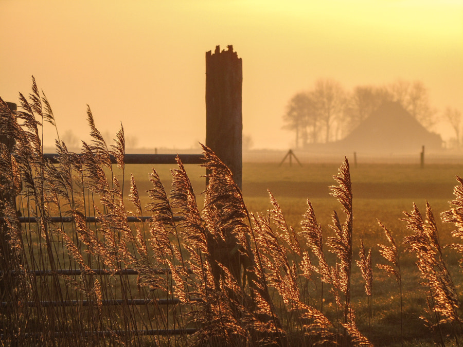 Frisian Countryside by Lars  on 500px.com