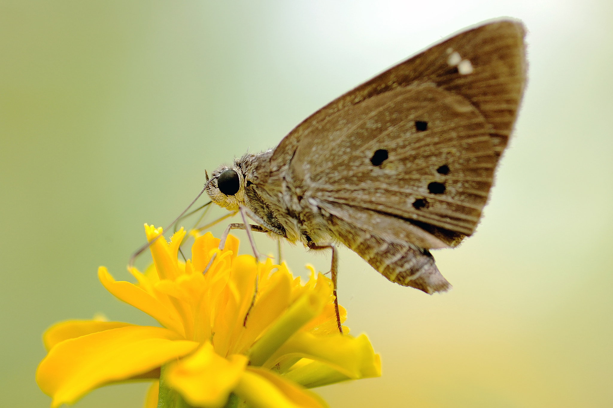 Photograph Butterfly by Anake Seenadee on 500px