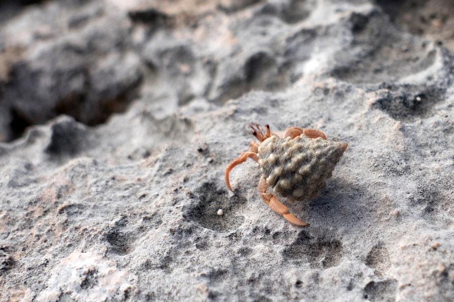 Le bernard-l'hermite by Christine Druesne on 500px.com