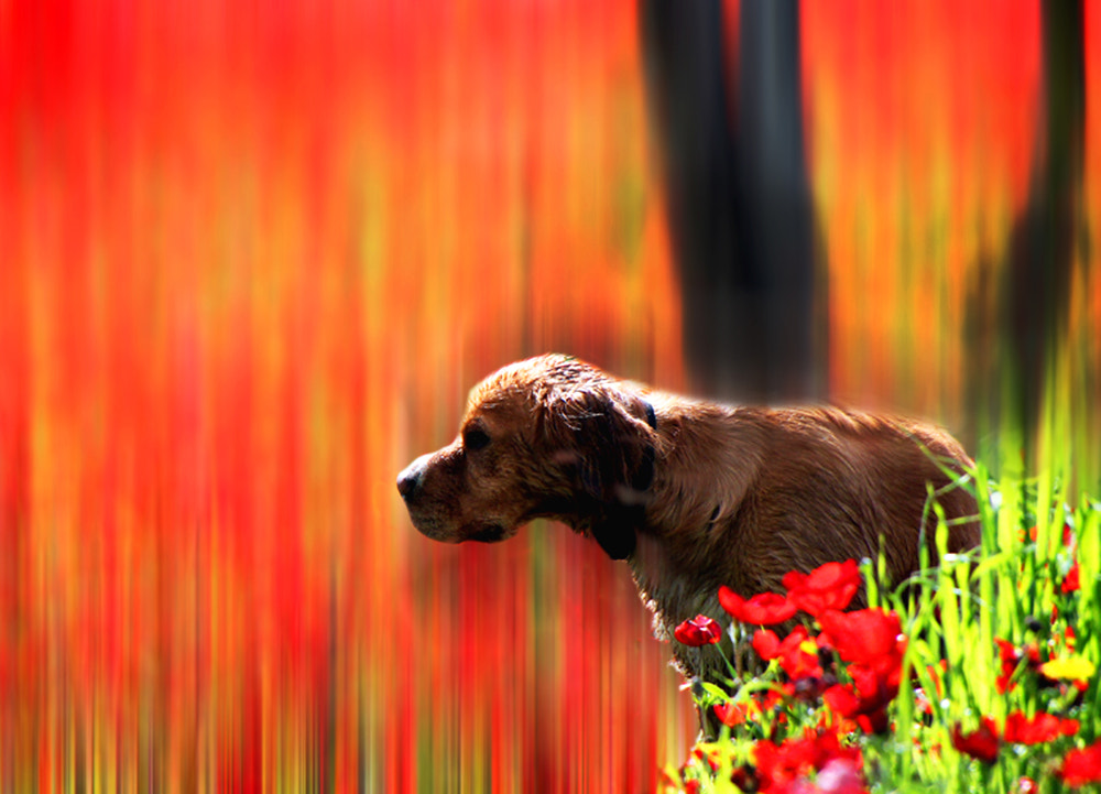 Photograph The dog in red by ARIK KFIR on 500px