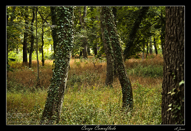 Photograph Corzo Camuflado by Antonio Jover on 500px