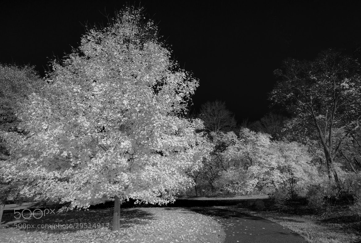 Photograph I Dream in IR by Angel Escalante on 500px
