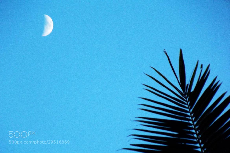 Photograph Leaf Waving to the Moon by Radhika Mukherjee on 500px