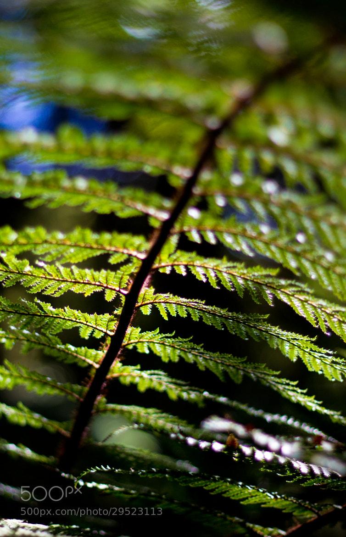 Photograph NZ Native Fern by Adam Crins on 500px
