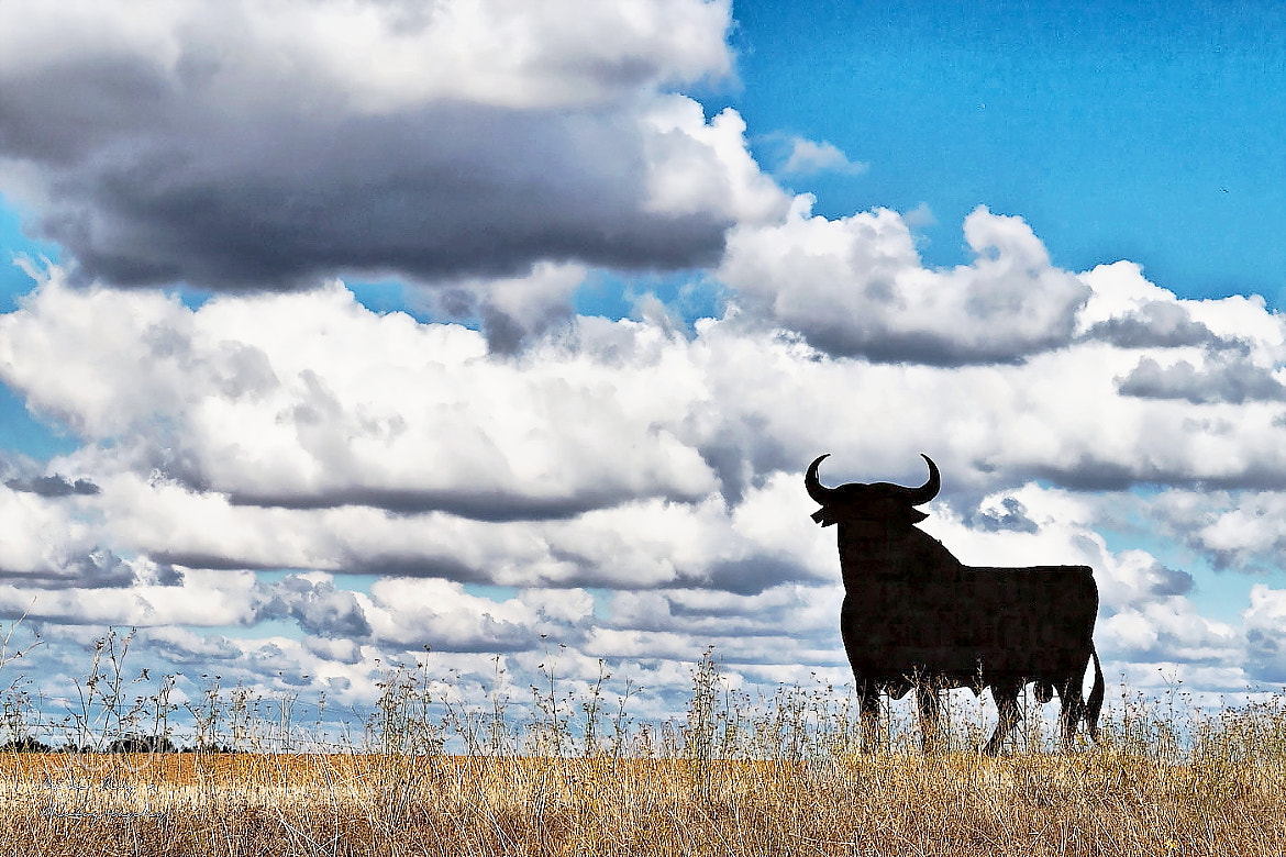Photograph The Bull by Mike May on 500px